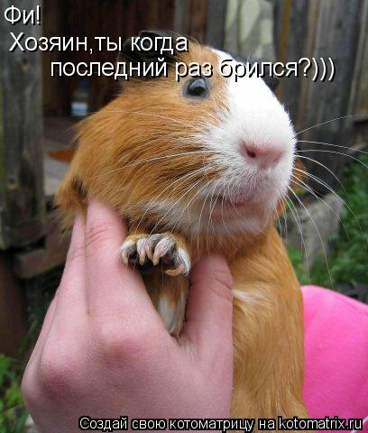Котоматрица: Фи!  Хозяин,ты когда  последний раз брился?)))