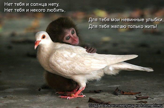 Котоматрица: Нет тебя и солнца нету, Нет тебя и некого любить, Для тебя мои невинные улыбки, Для тебя желаю только жить!