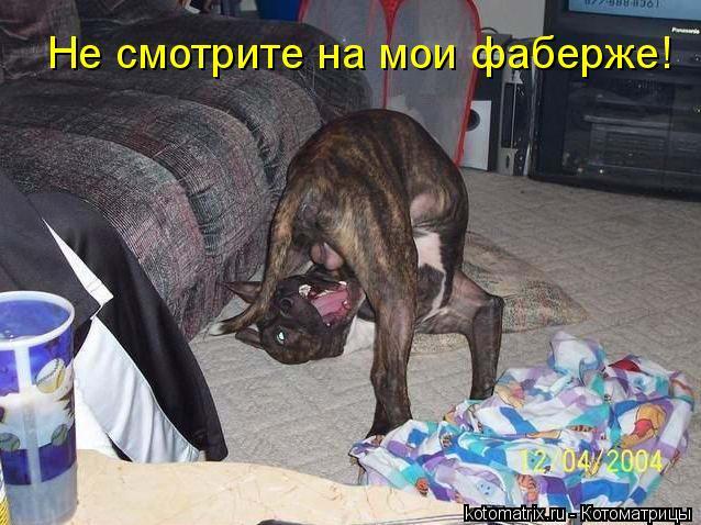 Котоматрица: Не смотрите на мои фаберже!