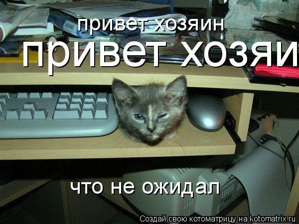 Котоматрица: привет хозяин привет хозяин что не ожидал