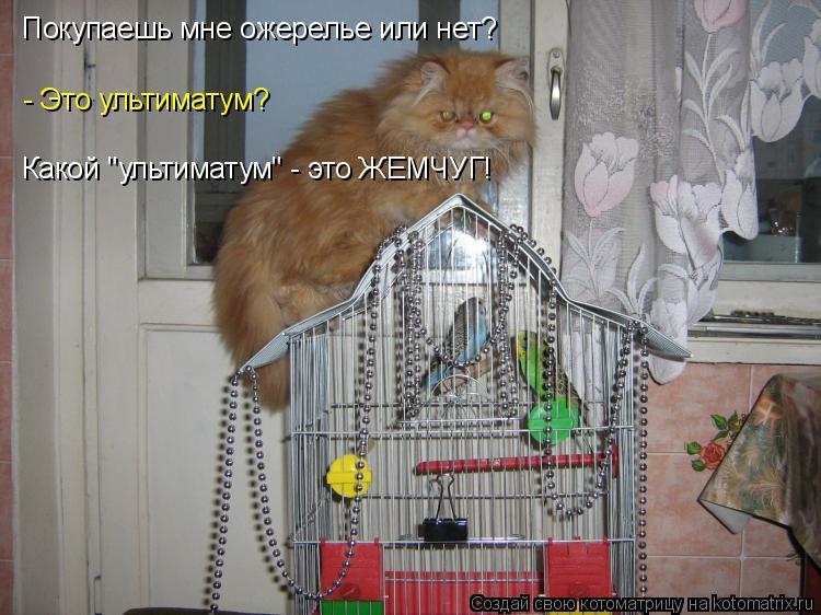 """Котоматрица: Какой """"ультиматум"""" - это ЖЕМЧУГ! - Это ультиматум?  Покупаешь мне ожерелье или нет?"""