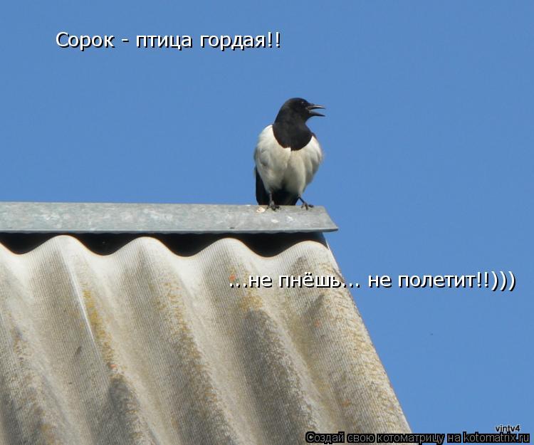 Котоматрица: Сорок - птица гордая!! ...не пнёшь... не полетит!!)))