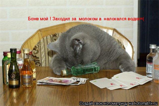 Котоматрица: Боже мой ! Заходил за  молоком а  налокался водки=(