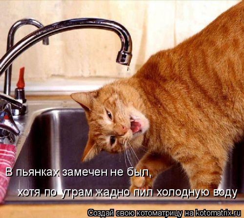Котоматрица: В пьянках замечен не был, хотя по утрам жадно пил холодную воду