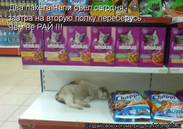 Котоматрица: Два пакета Чапи съел сегодня , завтра на вторую полку переберусь . Чем не РАЙ !!!