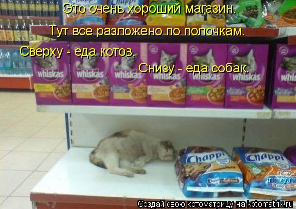 Котоматрица: Это очень хороший магазин. Тут все разложено по полочкам. Сверху - еда котов, Снизу - еда собак.