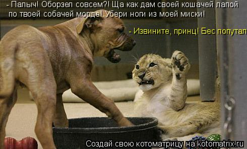 Котоматрица: - Палыч! Оборзел совсем?! Ща как дам своей кошачей лапой по твоей собачей морде! Убери ноги из моей миски! - Извините, принц! Бес попутал!