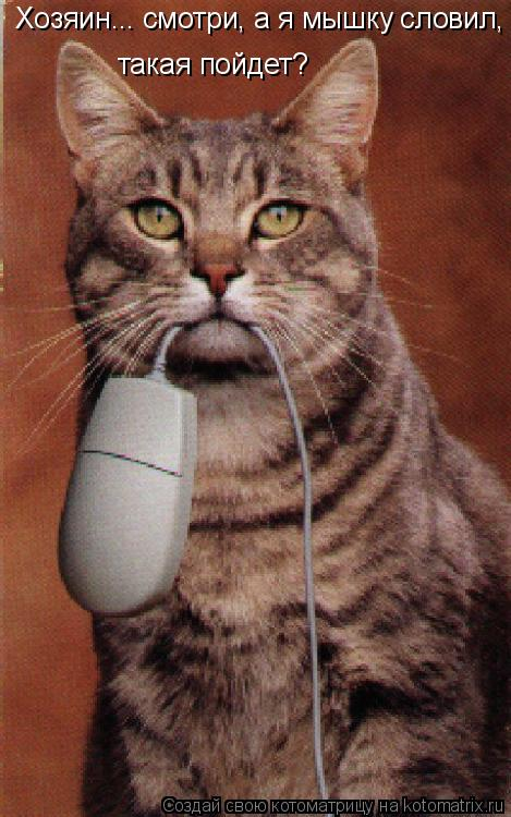 Котоматрица: Хозяин... смотри, а я мышку словил, такая пойдет? такая пойдет?