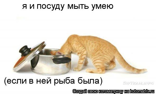 Котоматрица: я и посуду мыть умею (если в ней рыба была)