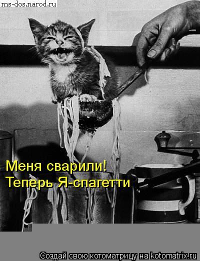 Котоматрица: Меня сварили! Теперь Я-спагетти