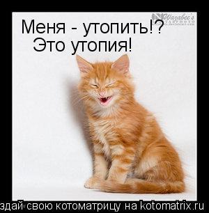 Котоматрица: Меня - утопить!? Это утопия!