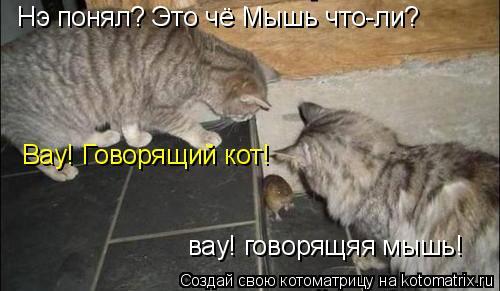 Котоматрица: Нэ понял? Это чё Мышь что-ли? Вау! Говорящий кот! вау! говорящяя мышь!