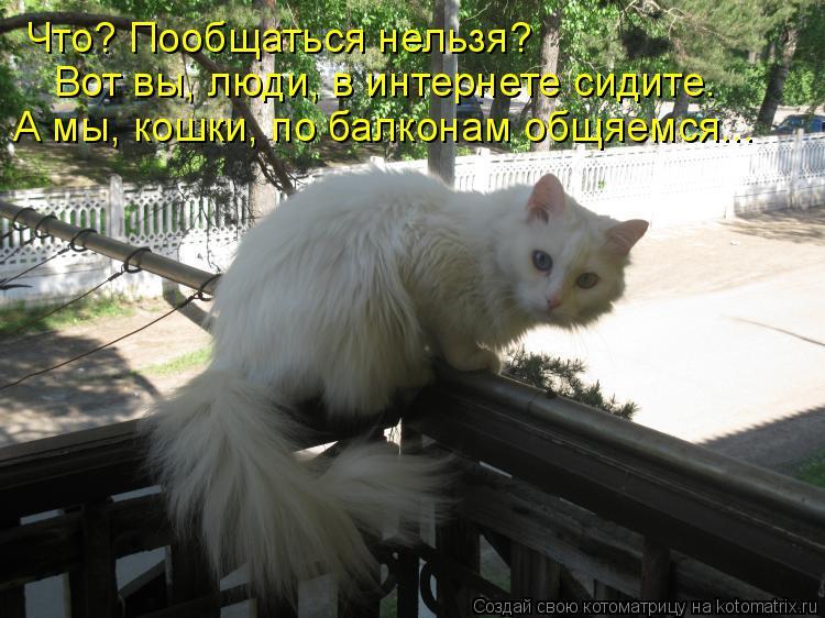 Котоматрица: Что? Пообщаться нельзя? Вот вы, люди, в интернете сидите. А мы, кошки, по балконам общяемся...