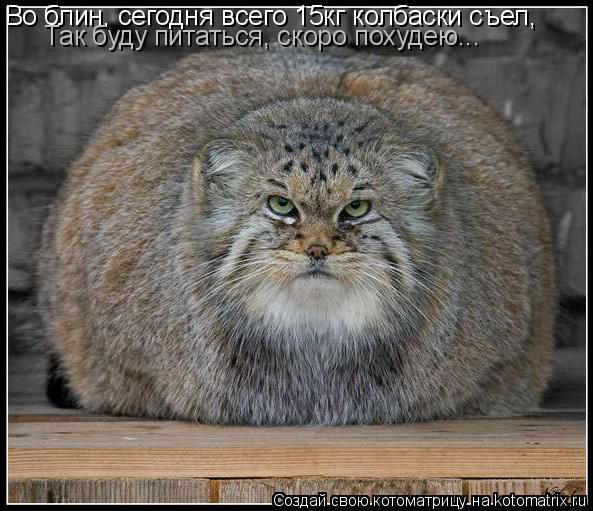 Котоматрица: Во блин, сегодня всего 15кг колбаски съел, Так буду питаться, скоро похудею...