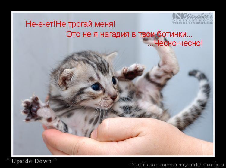 Котоматрица: Не-е-ет!Не трогай меня! Это не я нагадия в твои ботинки... ...Чесно-чесно!