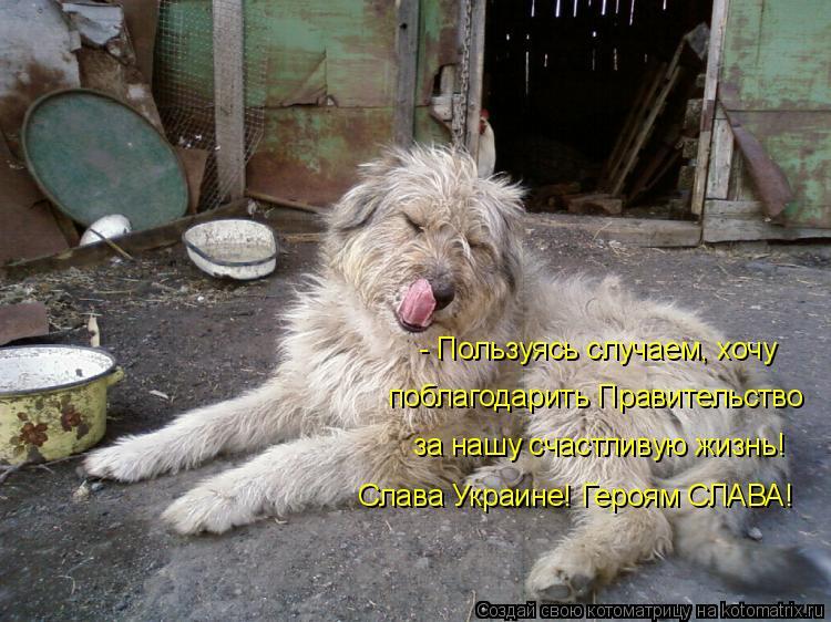 Котоматрица: - Пользуясь случаем, хочу  поблагодарить Правительство за нашу счастливую жизнь! Слава Украине! Героям СЛАВА!