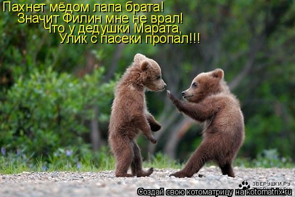 Котоматрица: Пахнет мёдом лапа брата!  Значит Филин мне не врал! Что у дедушки Марата, Улик с пасеки пропал!!!