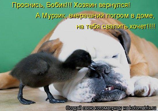 Котоматрица: Проснись, Бобик!!! Хозяин вернулся! А Мурзик, вчерашний погром в доме, на тебя свалить хочет!!!!
