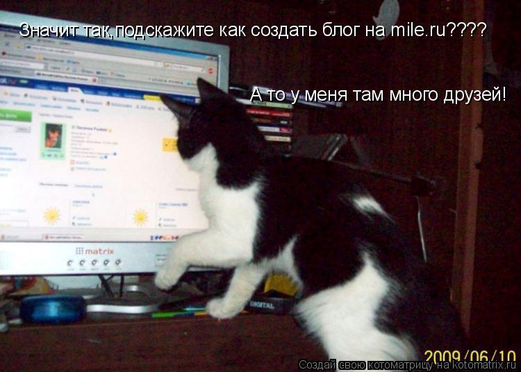 Котоматрица: Значит так,подскажите как создать блог на mile.ru???? А то у меня там много друзей!