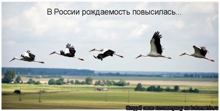 Котоматрица: В России рождаемость повысилась...