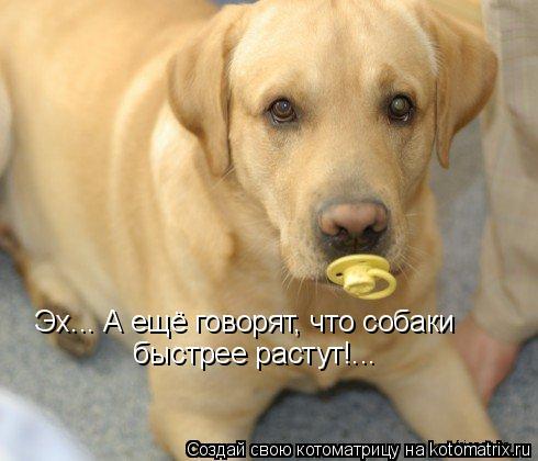 Котоматрица: Эх... А ещё говорят, что собаки быстрее растут!...