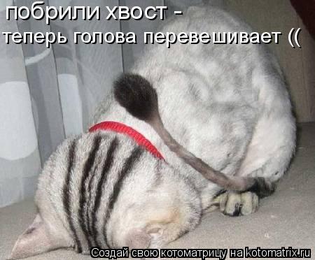 Котоматрица: побрили хвост -  теперь голова перевешивает ((
