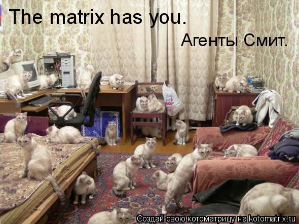 Котоматрица: The matrix has you. Агенты Смит.