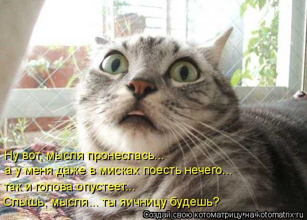 Котоматрица: Ну вот, мысля пронеслась...  а у меня даже в мисках поесть нечего... так и голова опустеет... Слышь, мысля... ты яичницу будешь?
