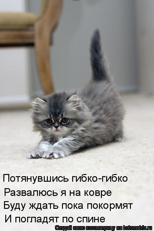 Котоматрица: И погладят по спине Буду ждать пока покормят Развалюсь я на ковре Потянувшись гибко-гибко