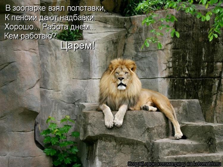 Котоматрица: В зоопарке взял полставки, К пенсии дают надбавки. Хорошо... Работа днем... Кем работаю? Царем!