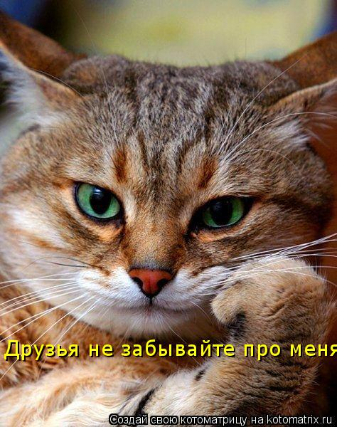 Котоматрица: Друзья не забывайте про меня