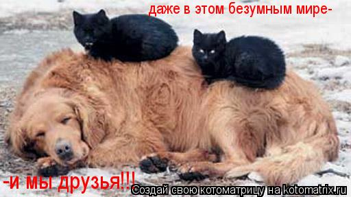 Котоматрица: даже в этом безумным мире- -и мы друзья!!!