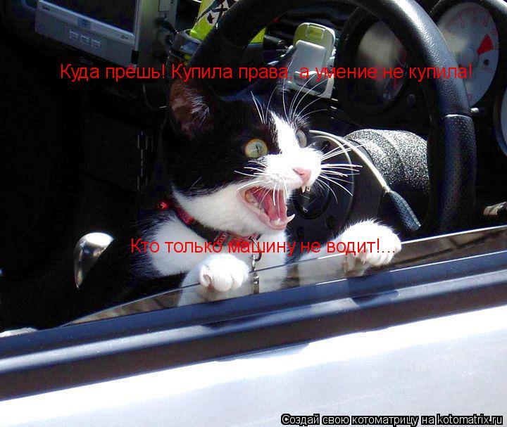 Котоматрица: Куда прёшь! Купила права, а умение не купила! Кто только машину не водит!...