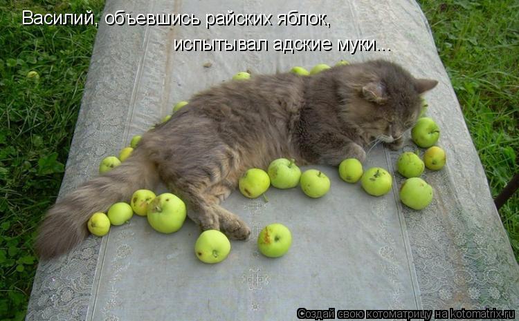 Котоматрица: Василий, объевшись райских яблок, испытывал адские муки...