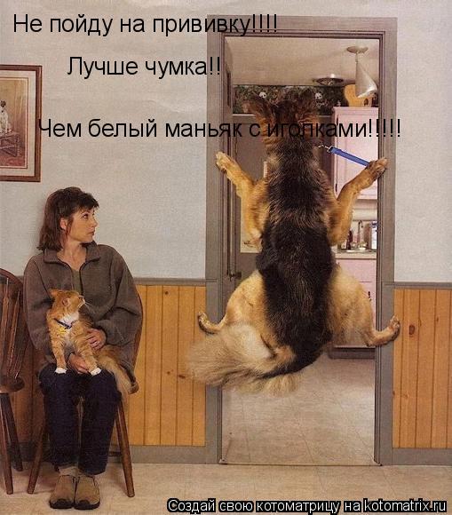 Котоматрица: Не пойду на прививку!!!! Лучше чумка!! Чем белый маньяк с иголками!!!!!