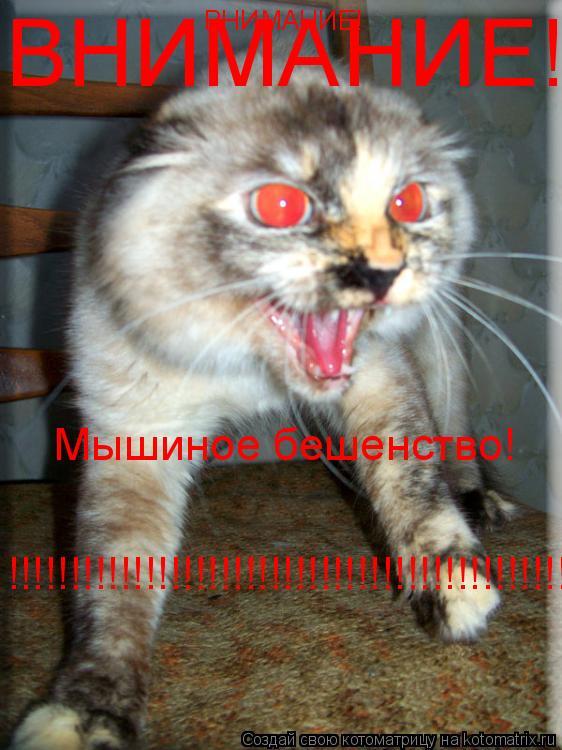 Котоматрица: ВНИМАНИЕ! ВНИМАНИЕ! Мышиное бешенство! !!!!!!!!!!!!!!!!!!!!!!!!!!!!!!!!!!!!!!!!!!!!!!!!!!!!!!!!!!!!!!!!!!!!!!!!!!!!!!!!!!!!!!!!!!!!!!!!!!!!!!!!!!!!!!!