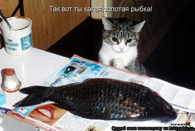 Котоматрица: Так вот ты какая,золотая рыбка!