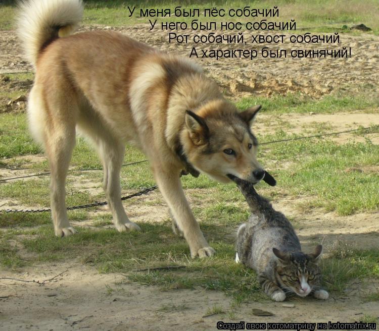 Котоматрица: У меня был пёс собачий У него был нос собачий Рот собачий, хвост собачий А характер был свинячий!