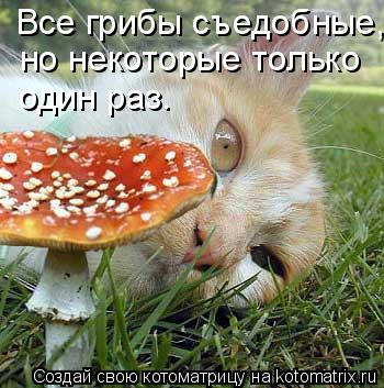 Котоматрица: Все грибы съедобные, но некоторые только  один раз.