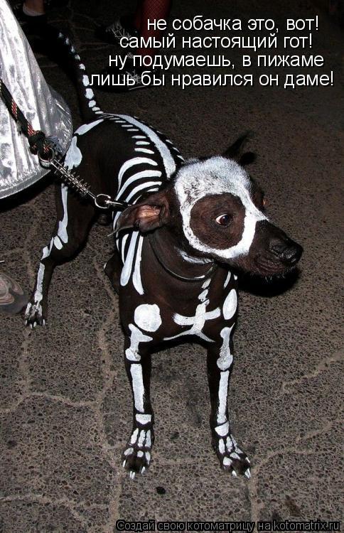 Котоматрица: не собачка это, вот! самый настоящий гот! ну подумаешь, в пижаме лишь бы нравился он даме!