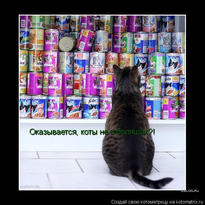 Котоматрица: Оказывается, коты не в беляшах?!