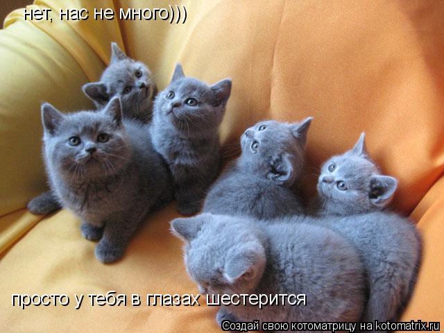 Котоматрица: нет, нас не много))) просто у тебя в глазах шестерится