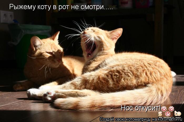 Котоматрица: Рыжему коту в рот не смотри..... Нос откусит!
