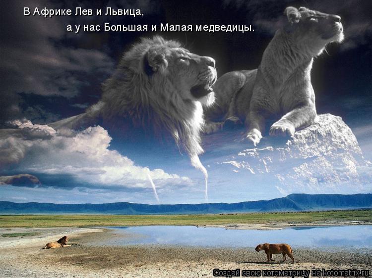 Котоматрица: В Африке Лев и Львица,  а у нас Большая и Малая медведицы.