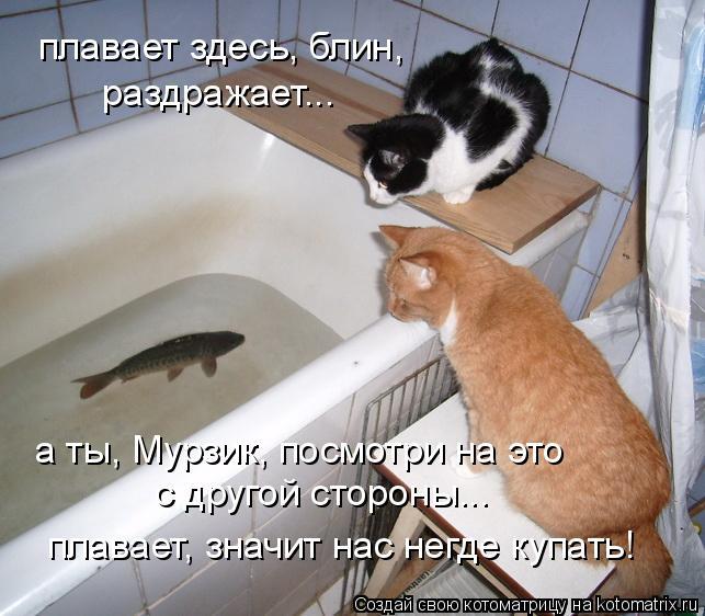 Котоматрица: плавает здесь, блин,  раздражает... а ты, Мурзик, посмотри на это  с другой стороны... плавает, значит нас негде купать!