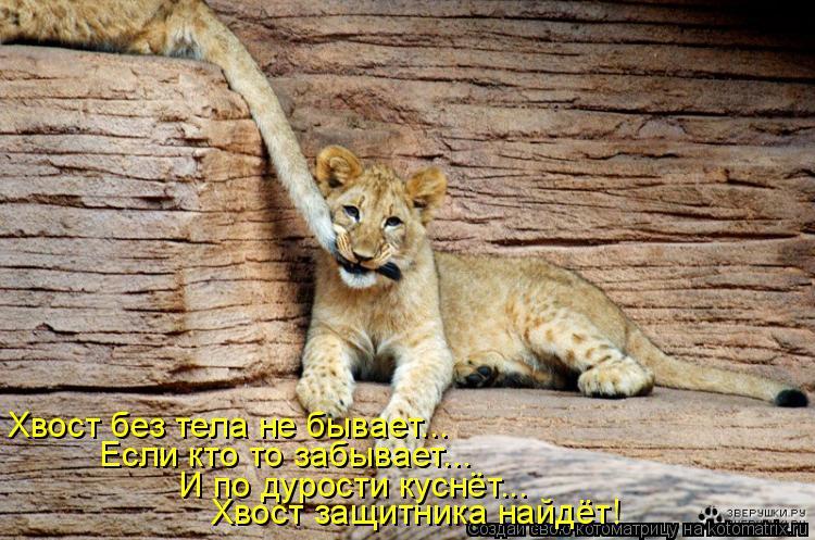 Котоматрица: Хвост без тела не бывает... Если кто то забывает... Хвост защитника найдёт! И по дурости куснёт...