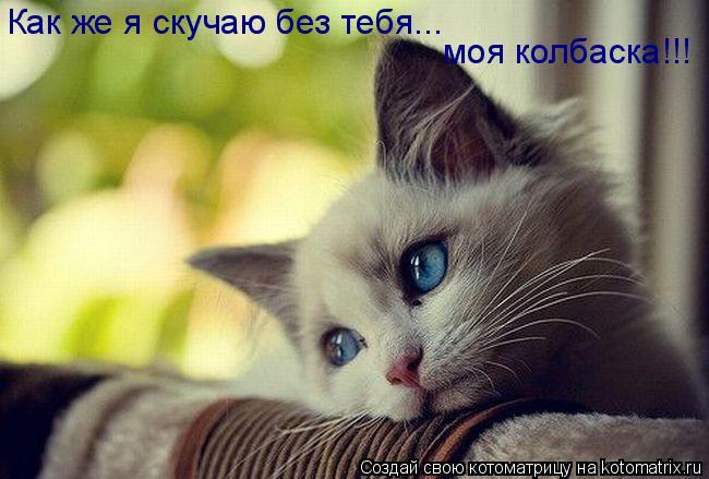 Котоматрица: Как же я скучаю без тебя... моя колбаска!!!