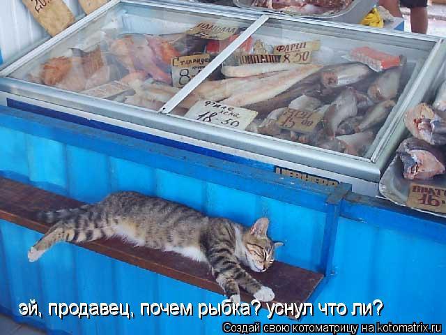 Котоматрица: эй, продавец, почем рыбка? уснул что ли? эй, продавец, почем рыбка? уснул что ли?