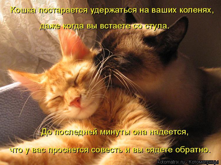 Котоматрица: Кошка постарается удержаться на ваших коленях,  даже когда вы встаете со стула.  До последней минуты она надеется,  что у вас проснется совес