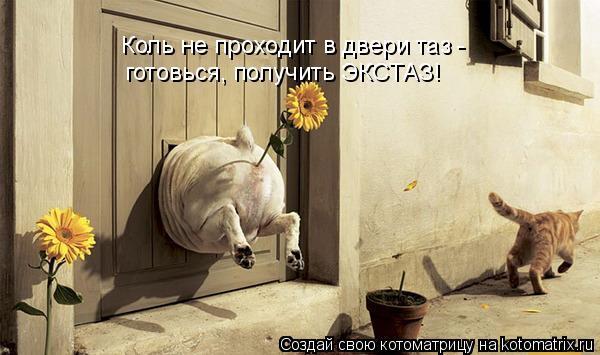 Котоматрица: Коль не проходит в двери таз -  готовься, получить ЭКСТАЗ!